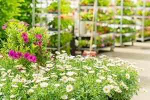 CosmosPlants - Εμπόριο φυτών και συναφών ειδών κήπου