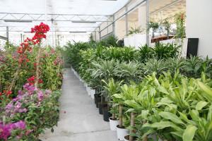 cosmosplants-plants15