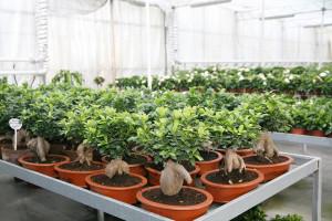 cosmosplants-plants18