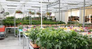 cosmosplants-plants2